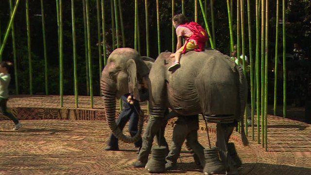 Running Wild - Elephant on Stage